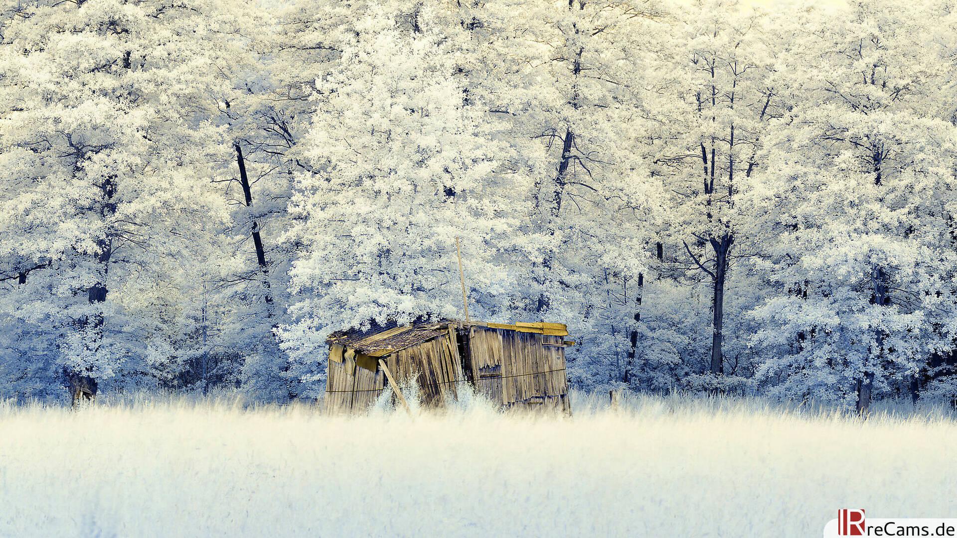 Farb Infrarot Hütte im Wald