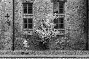 Wismar - Rosenpost von Michael Henning Rost